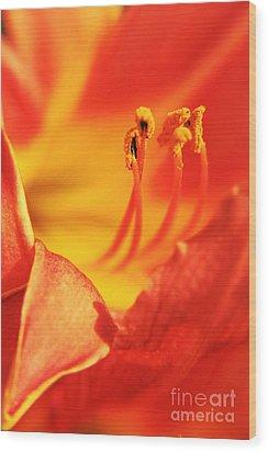 Orange Blooming Wood Print