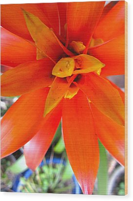 Orange Bromeliad Wood Print