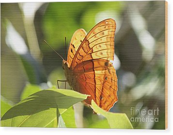 Wood Print featuring the photograph Orange Butterfly by Jola Martysz