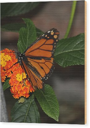 Wood Print featuring the photograph Orange Butterfly On Flowers by Bill Woodstock