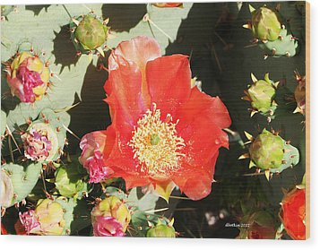 Wood Print featuring the photograph Orange Cactus Bloom by Dick Botkin