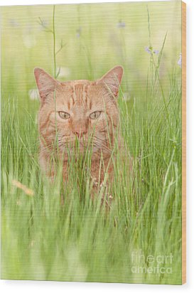 Orange Cat In Green Grass Wood Print
