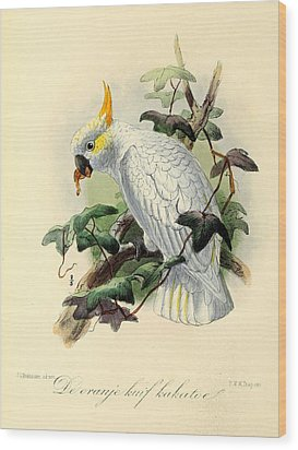 Orange Cockatoo Wood Print by Anton Oreshkin