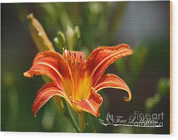 Orange Day Lily 20120614_5a Wood Print