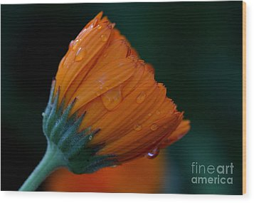 Orange Dream Wood Print by Ruth Jolly