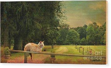 Orange Farm Cat Wood Print