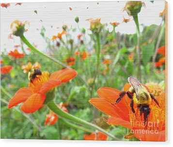 Orange Field Wood Print by Maria Scarfone