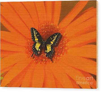 Orange Flower And A Butterfly By Saribelle Rodriguez Wood Print by Saribelle Rodriguez