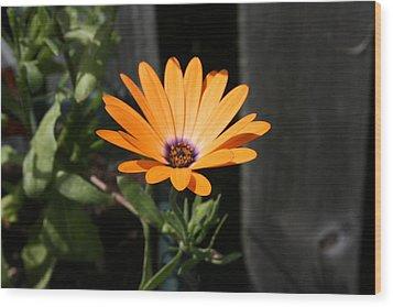 Orange Flower Wood Print by Paula Brown