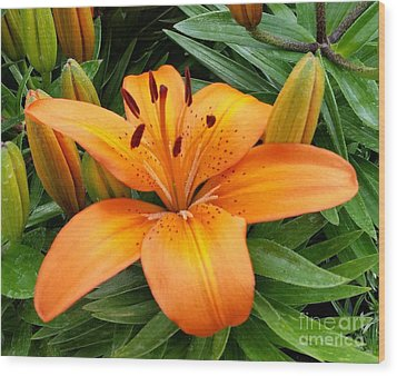 Wood Print featuring the photograph Orange Flower by Rose Wang