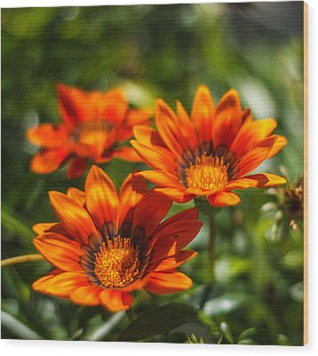 Wood Print featuring the photograph Orange Flowers by Jane Luxton