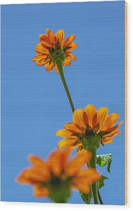 Wood Print featuring the photograph Orange Flowers On Blue Sky by Debbie Karnes