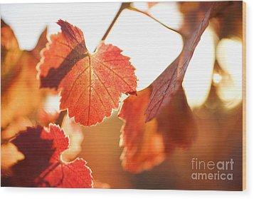 Orange Grapevine Leaves Wood Print by Charmian Vistaunet