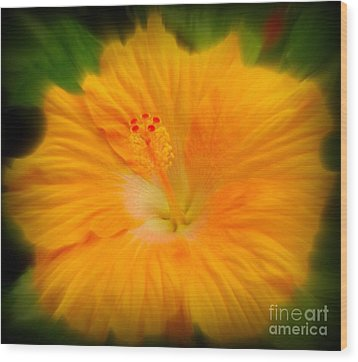 Wood Print featuring the photograph Orange Hibiscus Flower by Clare Bevan