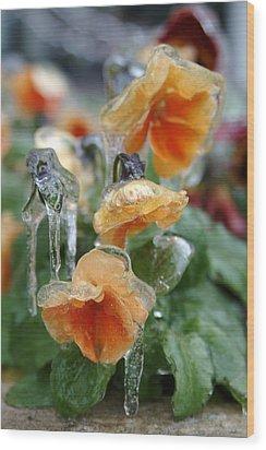 Orange Iced Pansies Wood Print