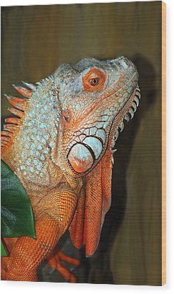 Orange Iguana Wood Print by Patrick Witz
