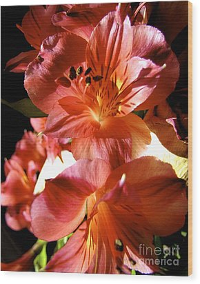 Orange Lilies Wood Print