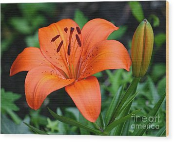 Orange Lily Wood Print by Susanne Baumann