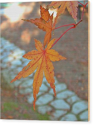Orange Maple Leaves Wood Print by Lorna Hooper