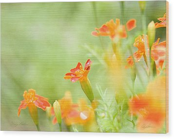 Wood Print featuring the photograph Orange Meadow by Ann Lauwers