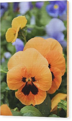 Wood Print featuring the photograph Orange Pansies by Elizabeth Budd