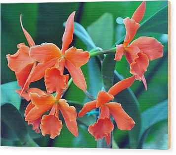 Orange Perfection Wood Print by Gail Butler