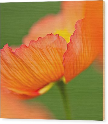 Orange Poppy Wood Print by Joan Herwig