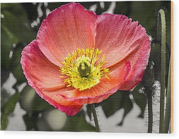 Wood Print featuring the digital art Orange Poppy by Photographic Art by Russel Ray Photos