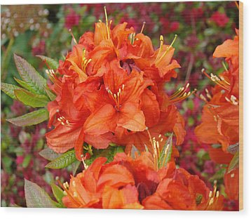 Orange Rhododendron Flowers Art Prints Wood Print by Baslee Troutman