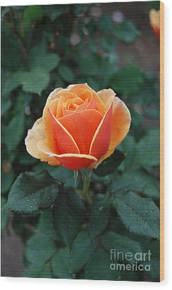 Wood Print featuring the photograph Orange Rose by Eva Kaufman