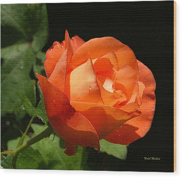 Wood Print featuring the photograph Orange Rose by Haleh Mahbod