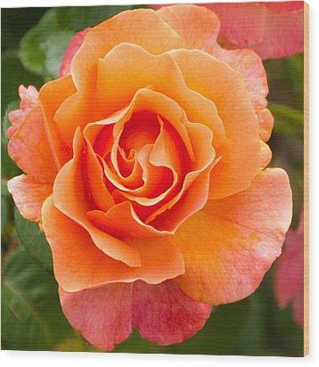Orange Rose Lillian Wood Print by Dee Dee  Whittle
