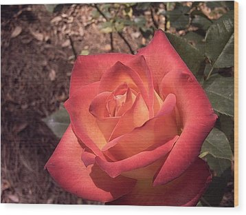 Wood Print featuring the photograph Orange Rose by Michele Kaiser