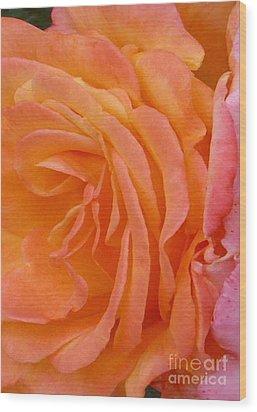Orange Rose Swirl Wood Print by Paul Clinkunbroomer