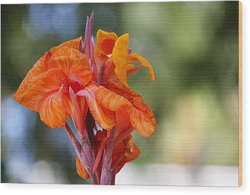 Orange Ruffled Beauty Wood Print
