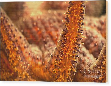 Orange Starfish Wood Print by Artist and Photographer Laura Wrede