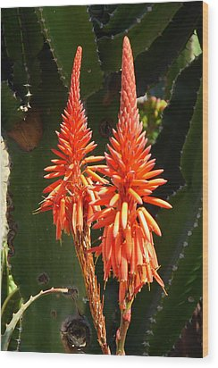 Wood Print featuring the photograph Orange Succulent by Lew Davis