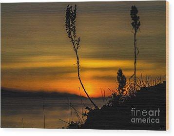 Orange Sunset Wood Print by Arlene Sundby