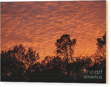 Orange Sunset Wood Print by D Wallace