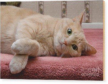 Orange Tabby Cat Lying Down Wood Print by Amy Cicconi