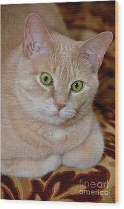 Orange Tabby Cat Poses Royally Wood Print by Amy Cicconi