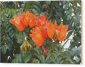 Wood Print featuring the photograph Orange Tree Blossoms by Lew Davis