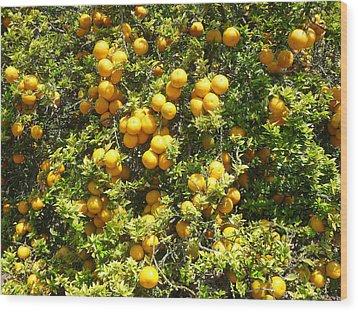 Orange Trees Wood Print by Mark Barclay