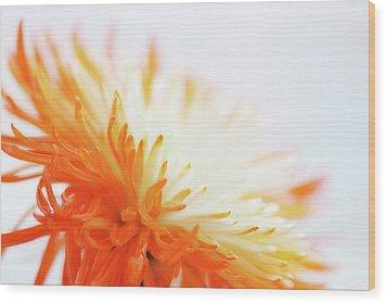 Orange Whisper Wood Print by Lisa Knechtel