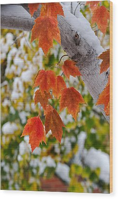 Wood Print featuring the photograph Orange White And Green by Ronda Kimbrow