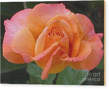 Orangerine Rose Wood Print by Paul Clinkunbroomer