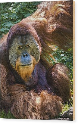 Wood Print featuring the photograph Orangutan by Rob Amend