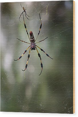 Wood Print featuring the photograph Orb Weaver 006 by Chris Mercer