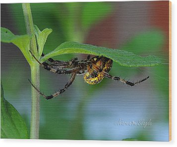 Orb Weaver Spider Wood Print by Karen Slagle
