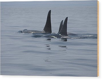 Wood Print featuring the photograph Orca Family by Marilyn Wilson